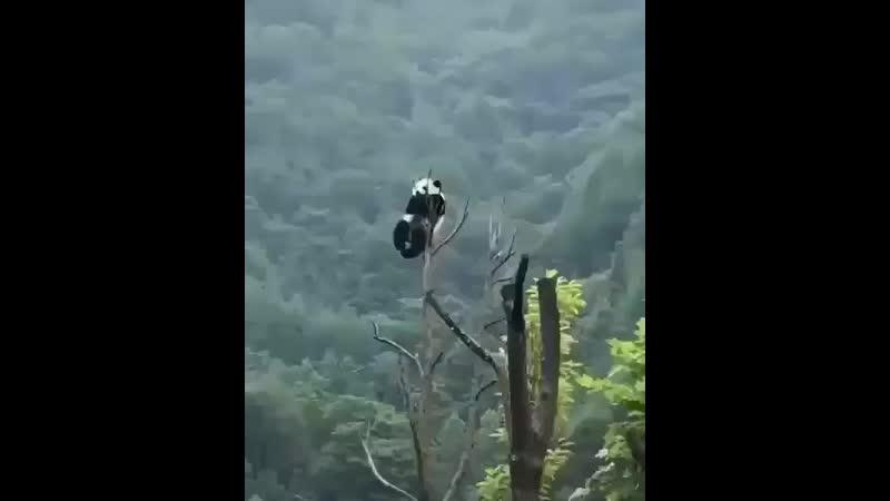Панда дзен