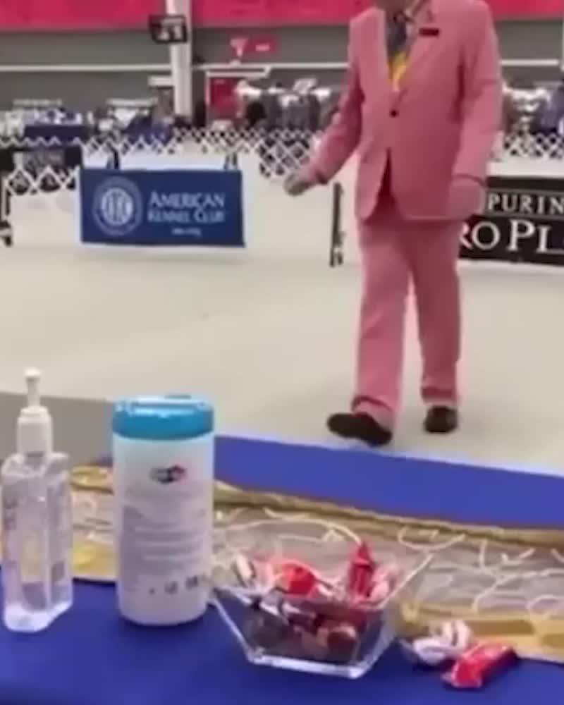 Эксперт на выставке собак решил проверить игрушечного пса девочки с аутизмом!