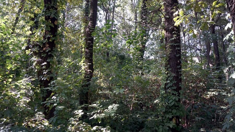 В Таганроге рощу Дубки посетили дендрологи Ботанического сада ЮФУ