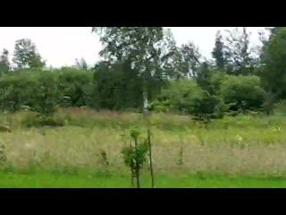 Деревня Красное, Ушачский район. Витебская область. В один из дворов пришёл зубр.