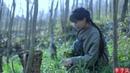(采野菜)If You Miss the Best Days to Pick Wild Herbs, You've Missed the Entire Spring |Liziqi Channel