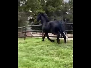 Невероятной красоты конь-огонь