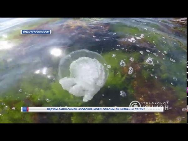 Медузы заполонили Азовское море! Опасны ли незваные гости 04.08.2020, Панорама
