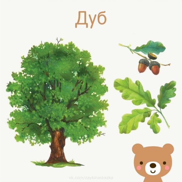 изучаем деревья с детьми картинки допустимы мини