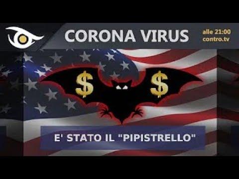 CORONAVIRUS è stato il pipistrello