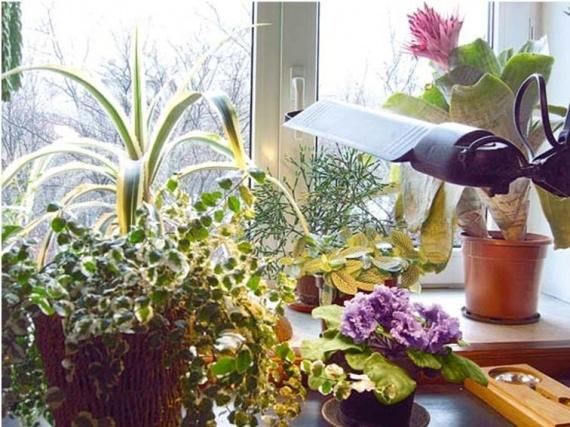 Как ухаживать за комнатными растениями в зимний период