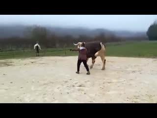 Я тоже лошадка! z njt kjiflrf!