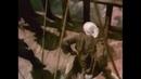 Лучший пиратский бой. Фильм «L'odyssée du capitaine Blood» или «Одиссея капитана Блада» 1991г
