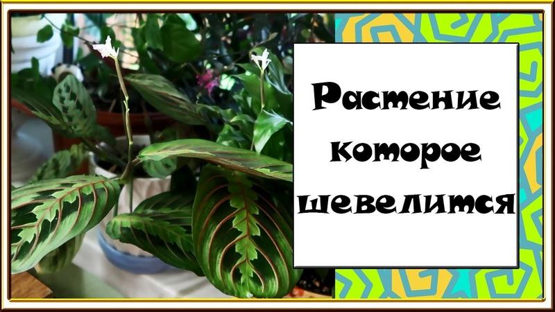 Новости с подоконника СЕНТЯБРЬ 2020 Обзор комнатных растений ХОЙИ КИСЛИЦЫ ПАПОРТНИКИ и др