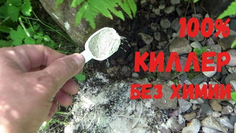 Топ 1 Средство от муравьёв и слизней Как избавиться от вредителей сада Незаменимый ЭКОКИЛЛЕР
