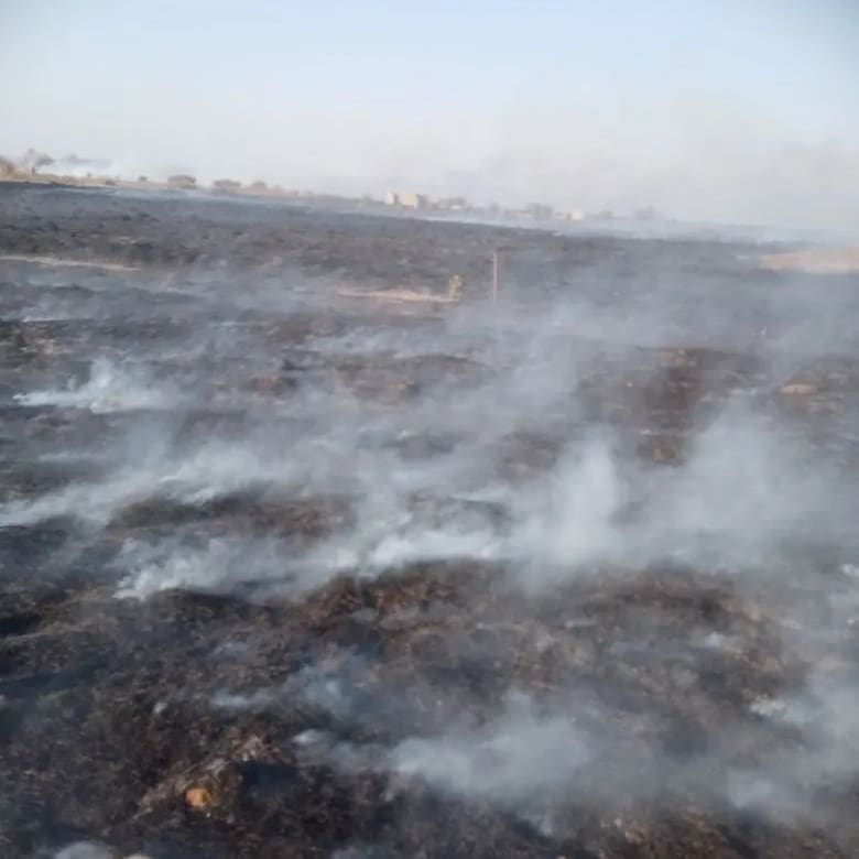 Причина пожаров – человеческая беспечность