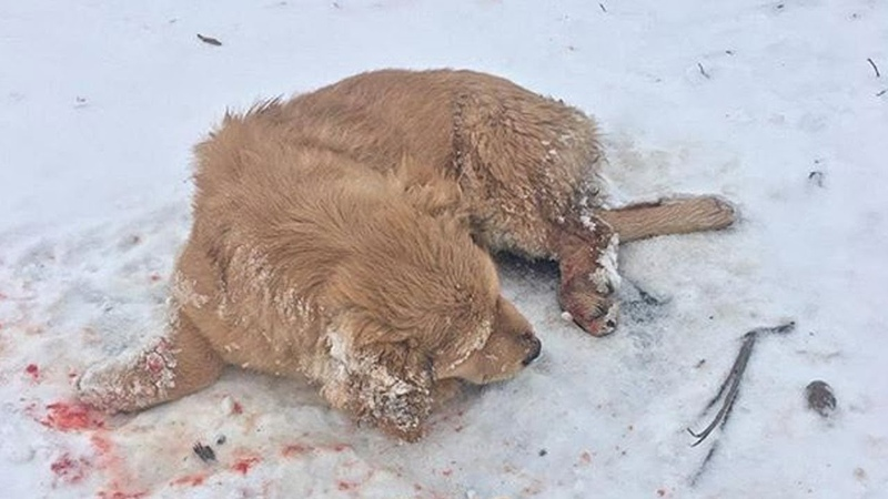 Rescue Poor Dog Was Beaten So Cruelly Fainting In The Cold Snow