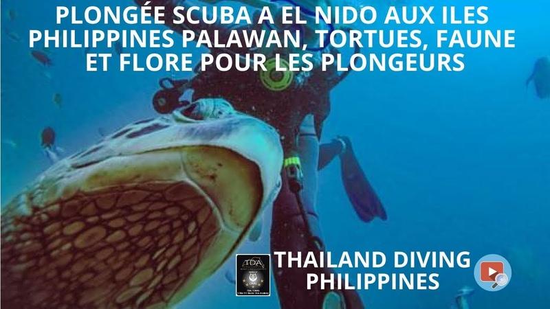 🤿Plongée scuba a El Nido aux iles Philippines Palawan, tortues, faune et flore pour les plongeurs