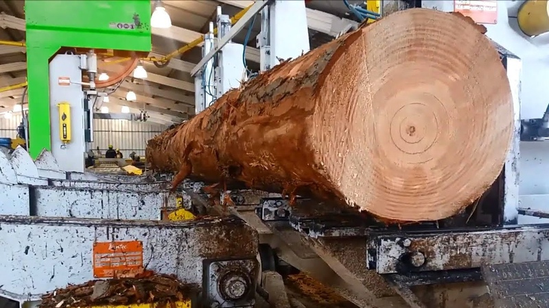 Awesome Huge Wood Sawmill Machines Working In Factory ! Hull Oakes Lumber Company