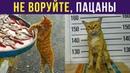 Приколы с котами КОТ К УСПЕХУ ШЁЛ Мемозг 323