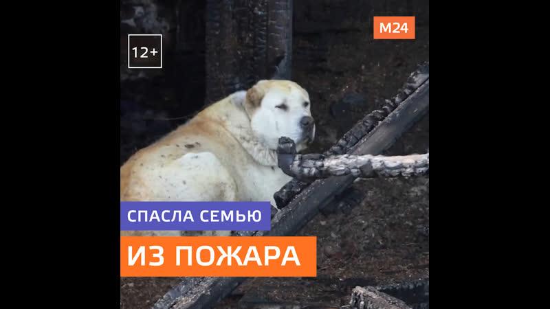 Собака спасла семью при пожаре в частном доме — Москва 24