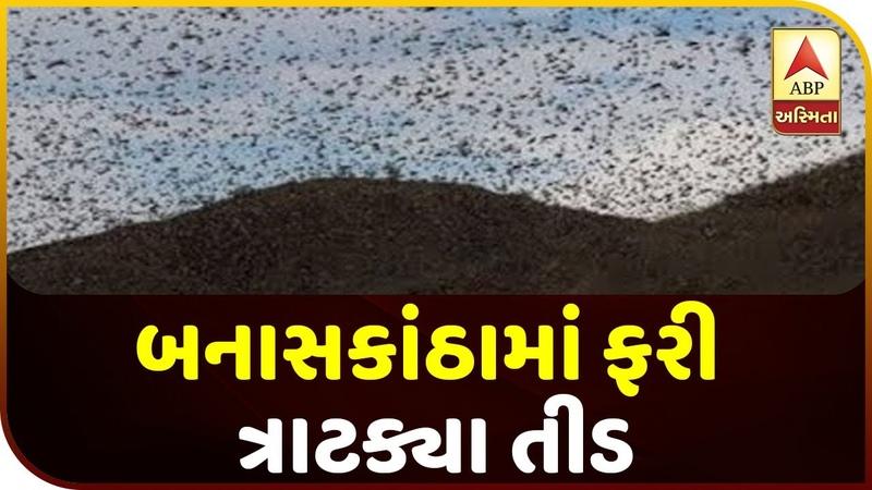 Locust Invasion Strikes Again In Banaskantha | ABP Asmita