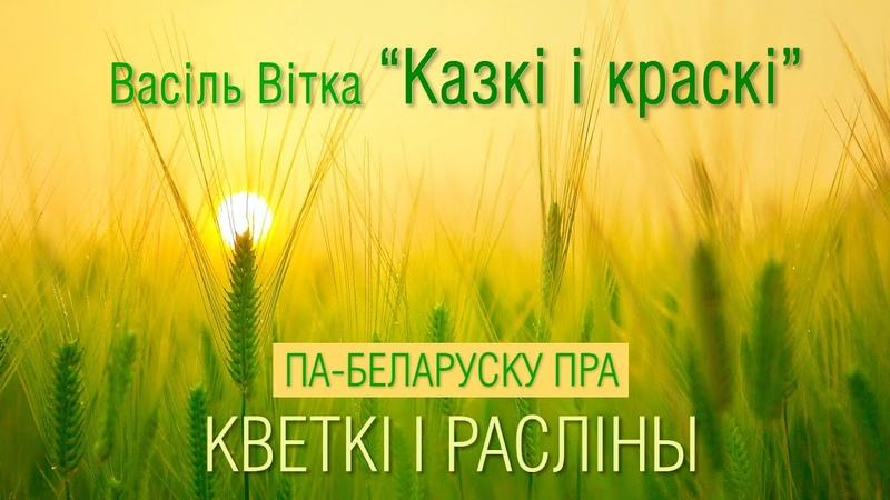 Васіль Вітка Казкі і краскі аўдыякніга пра кветкі і расліны па беларуску