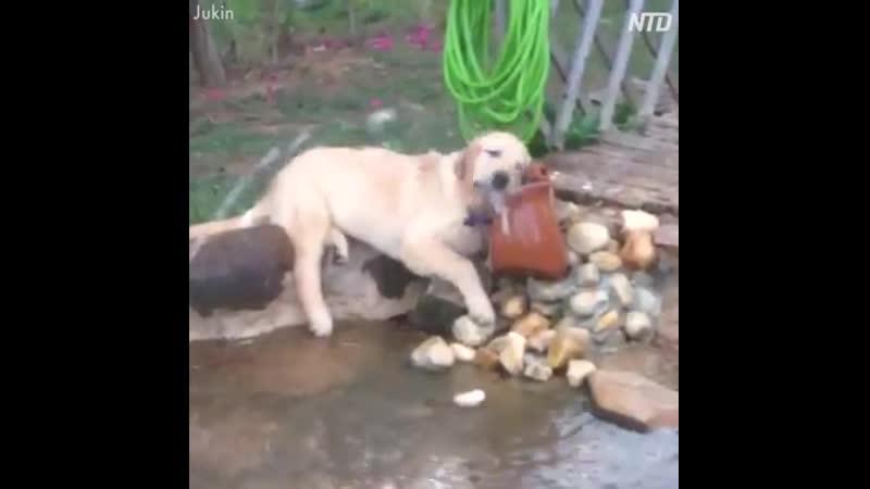 приколы с собаками на воде