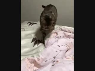 Кажется, кот на что-то намекает