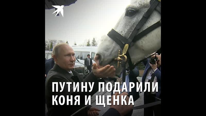 Путину подарили коня и щенка