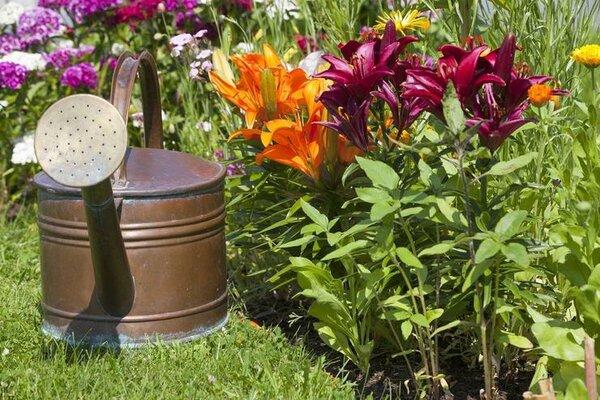 Чем подкормить лилии для пышного цветения