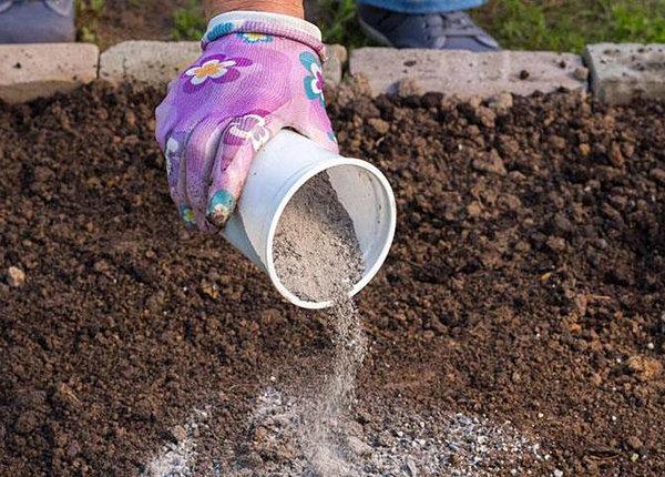 Почему золу вносят именно в осенний период. Чтобы минеральные или органические удобрения успели насытить почву необходимыми для хорошего развития растений микроэлементами, подготавливать участок