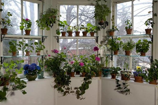 Неприхотливые комнатные цветы Даже самый простой интерьер приобретает изысканный вид, если он украшен зеленью. Гораздо лучше поставить в свободный угол высокую пальму или красивый кустарник, чем
