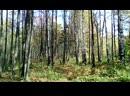 Осенний лес прекрасен в Солнечный день