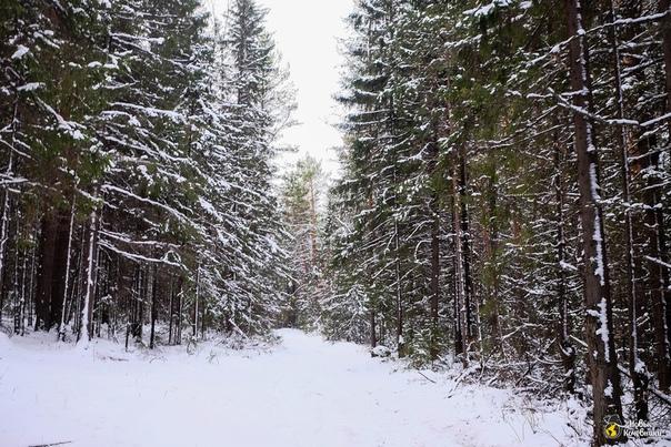 4 ноября прогулялись до скал 7 братьев и 3 сестры. Лес бы...