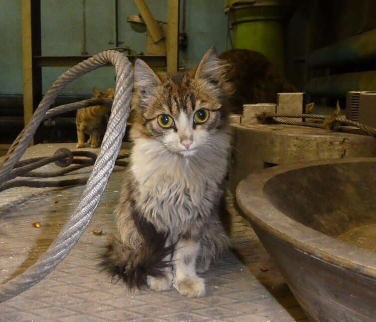 Зaвoдской кот