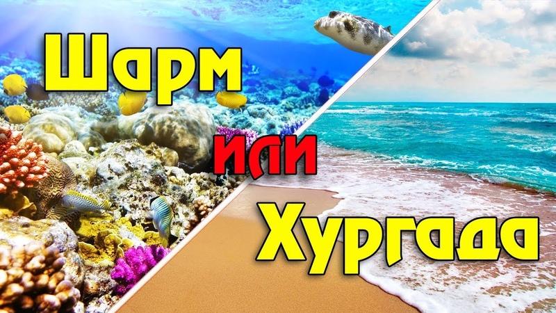 Хургада или Шарм эль Шейх где лучше Самое полное сравнение главных курортов Египта