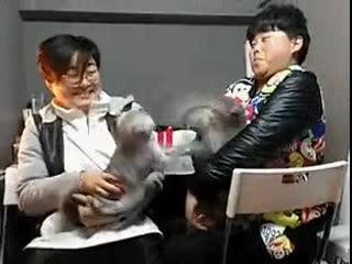 Обычные коты в Японии