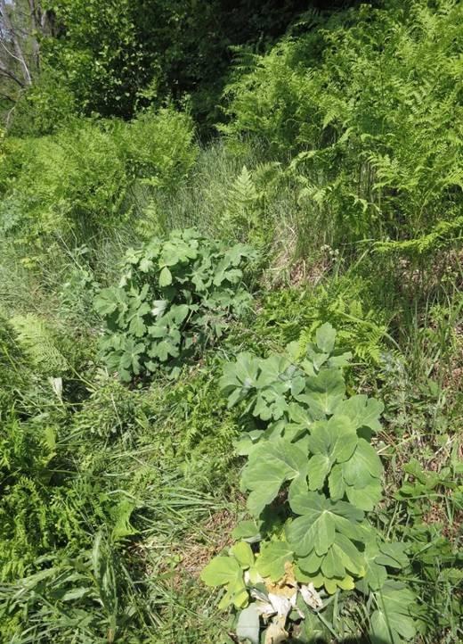 Редкое растение, занесенное в Красную книгу, вырастили специалисты из Марий Эл