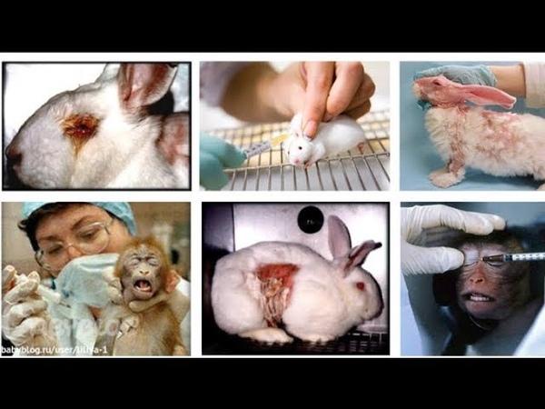 Тесты на животных Красота требует жертв