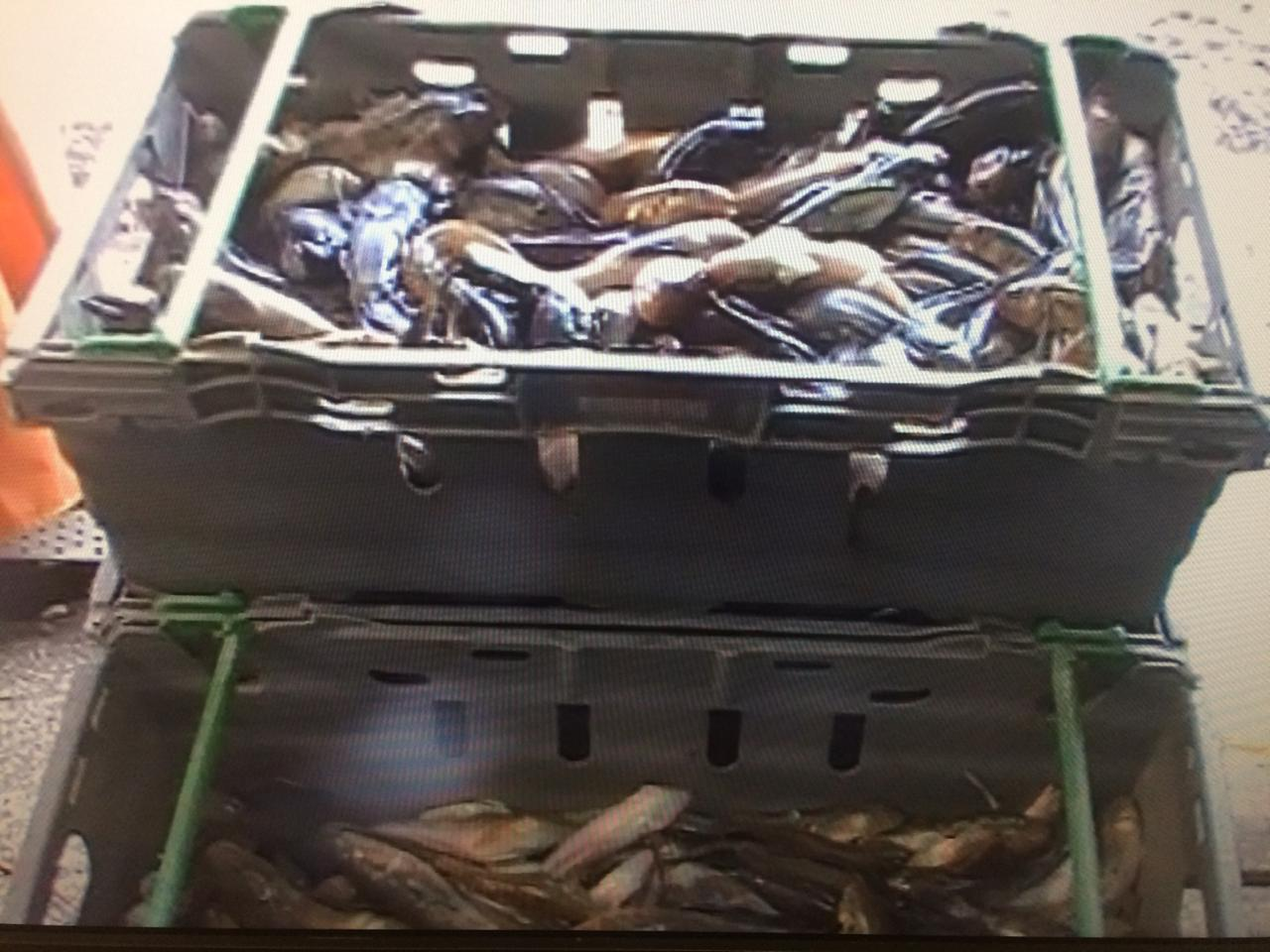 Под Таганрогом пограничники задержали браконьера с уловом на сумму более 300 тыс. рублей