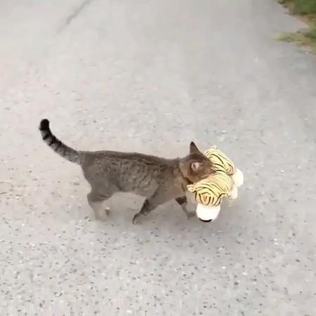"K I T T E N S - M A J O R on Instagram ""Follow admin @mheksi 🥰 Follow @petsmajors Video by TimmyTheLegend FB ♥️ . . . . . . . cat cats catof..."