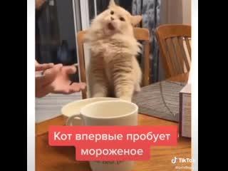 Кот пробуем мороженное))