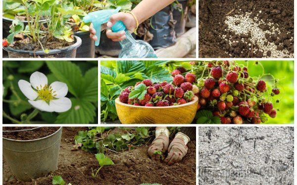 Какой прикорм использовать для получения хорошего урожая и когда