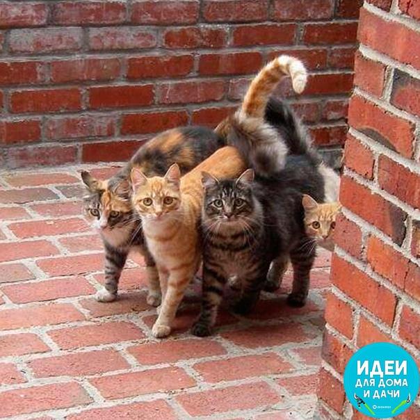 Милых котеек вам в ленту!!!