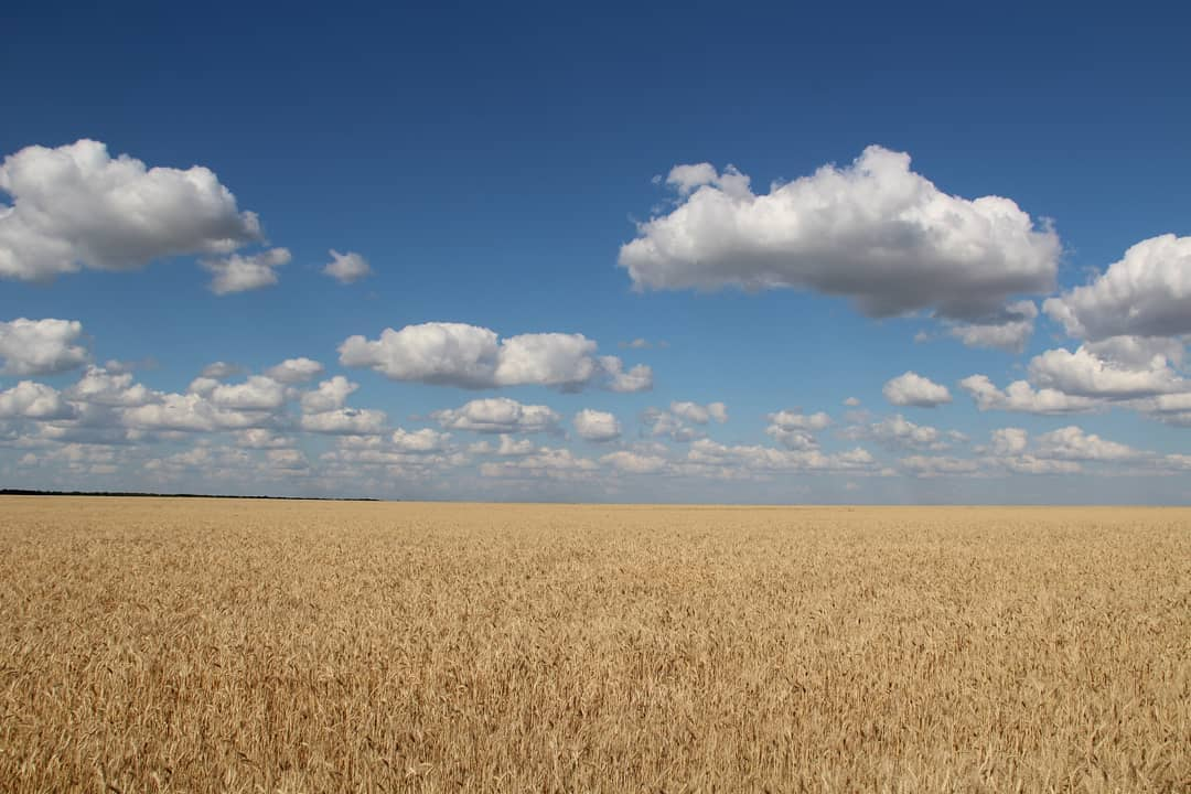 """Российское правительство скорректировало перечень признаков неиспользуемых сельхозземель. Об этом сообщило информагентство """"СарБК"""""""