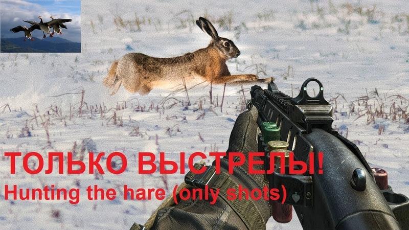 Охота на зайца ЛУЧШИЕ МОМЕНТЫ НАРЕЗКА ВЫСТРЕЛЫ
