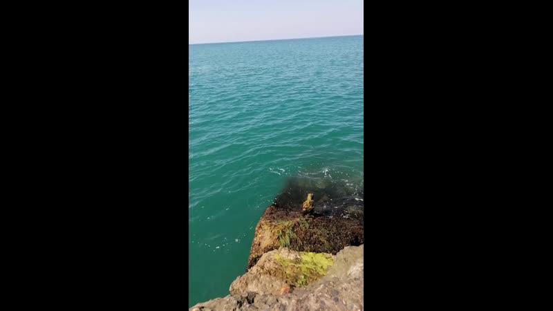 Море у жд вокзала Адлер