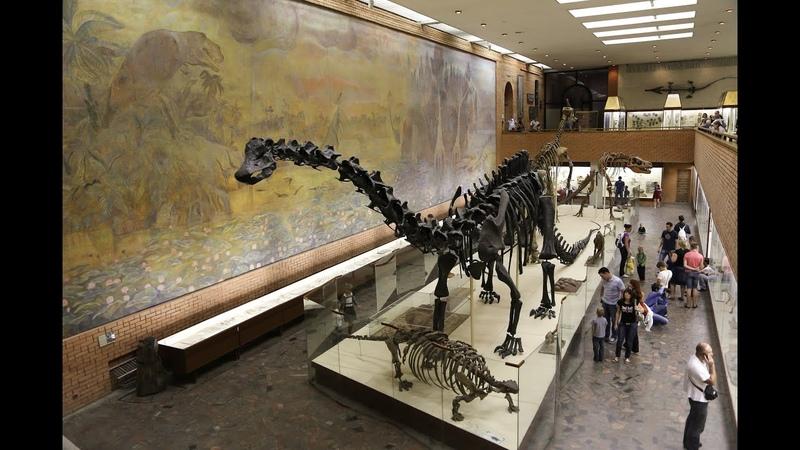 Москва палеонтологический музей Dinosaurs in Moscow