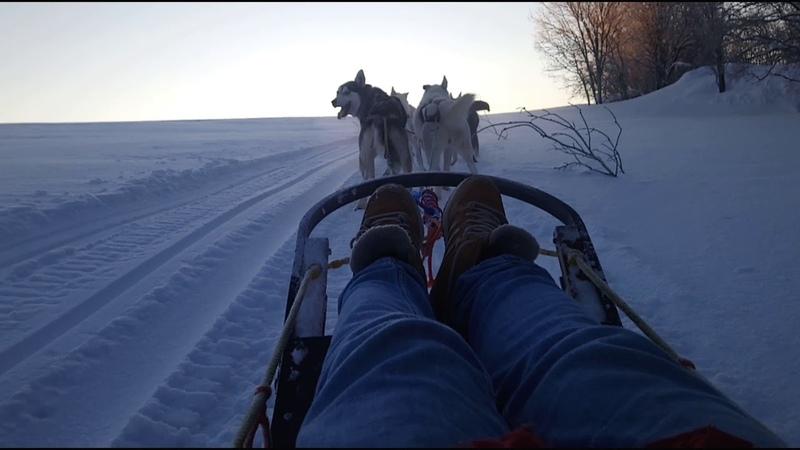 Đi xe kéo chó husky | Lạnh tê tái âm 25 độ không nói được gì 😁 | Cuộc sống ở Nga