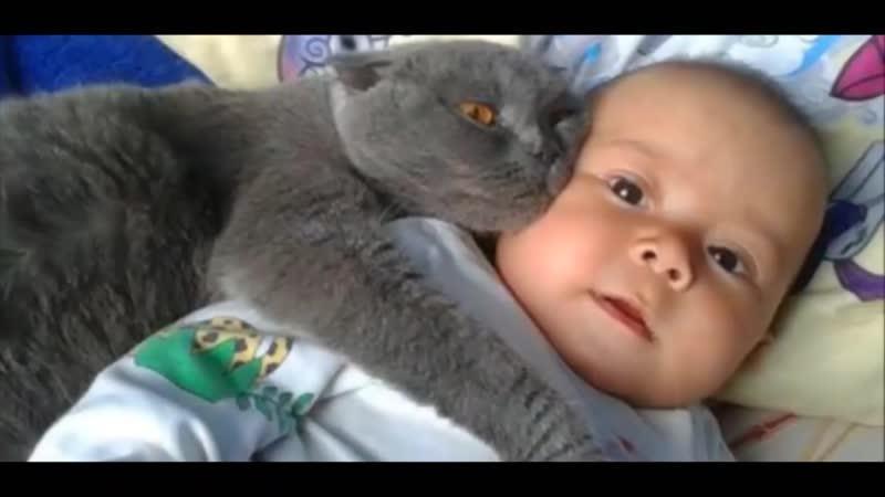 Кошки Защищают Детей супер милое видео