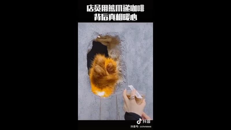В Шанхае открылась кофейня где кофе выдает лапа медведя