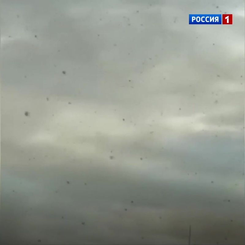В Красноярске нашествие берёзовой тли — Россия 1