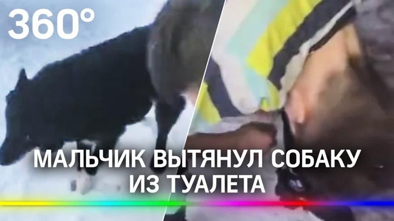 Спасение провалившейся в выгребную яму собаки сняли на видео