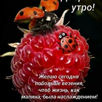 Фото профиля Сергея Строгова